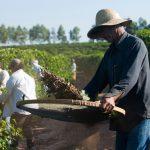 Pesquisa diz que 36% dos brasileiros com mais de 50 anos ainda trabalham